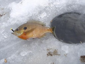 ice_fishing_043--wp.246215306_std