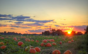 Pumpkins-Sunset-Pumpkin-Patch