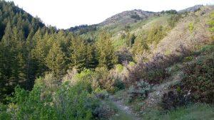 TrailGoesDownhill